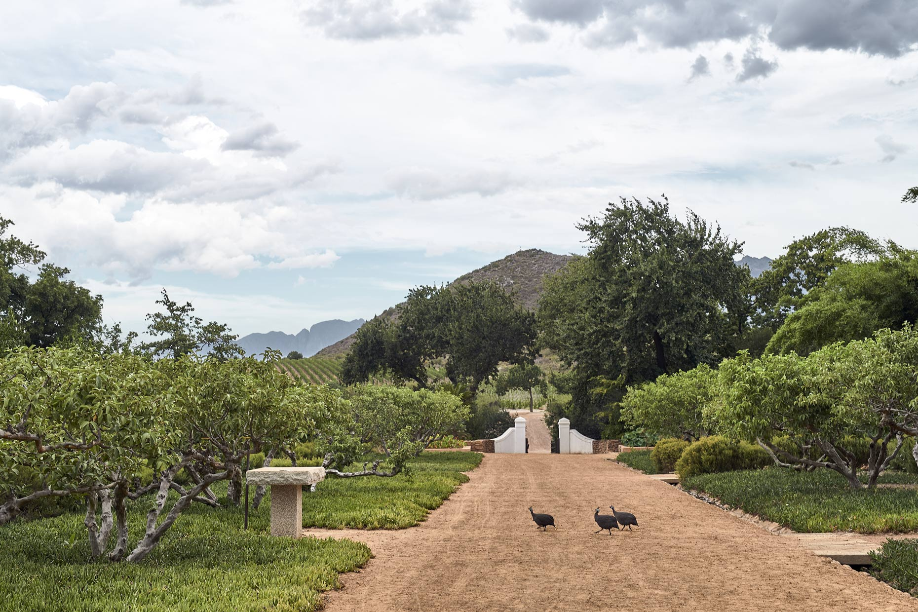 Babylonstoren-Guinea-Fowl-Walking-Across-Dirt-Path