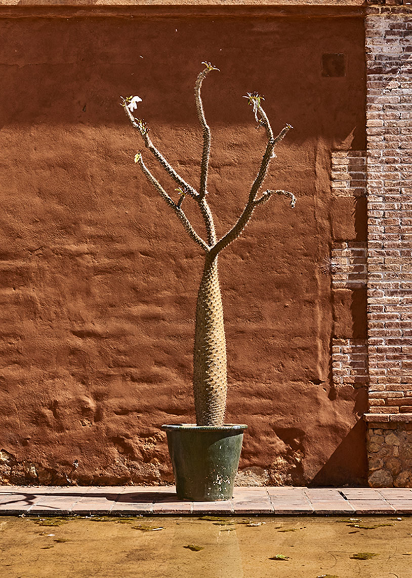 Beautiful-cactus-in-pot-against-rusty-wall