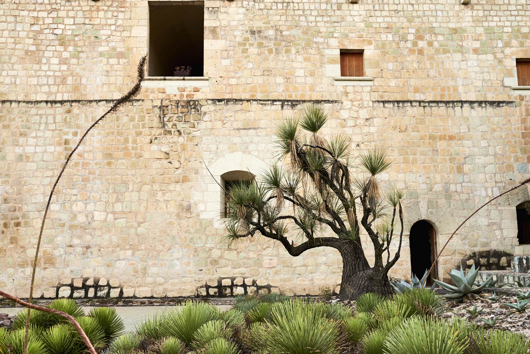 Beautiful-cactus-tree-along-old-brick-wall