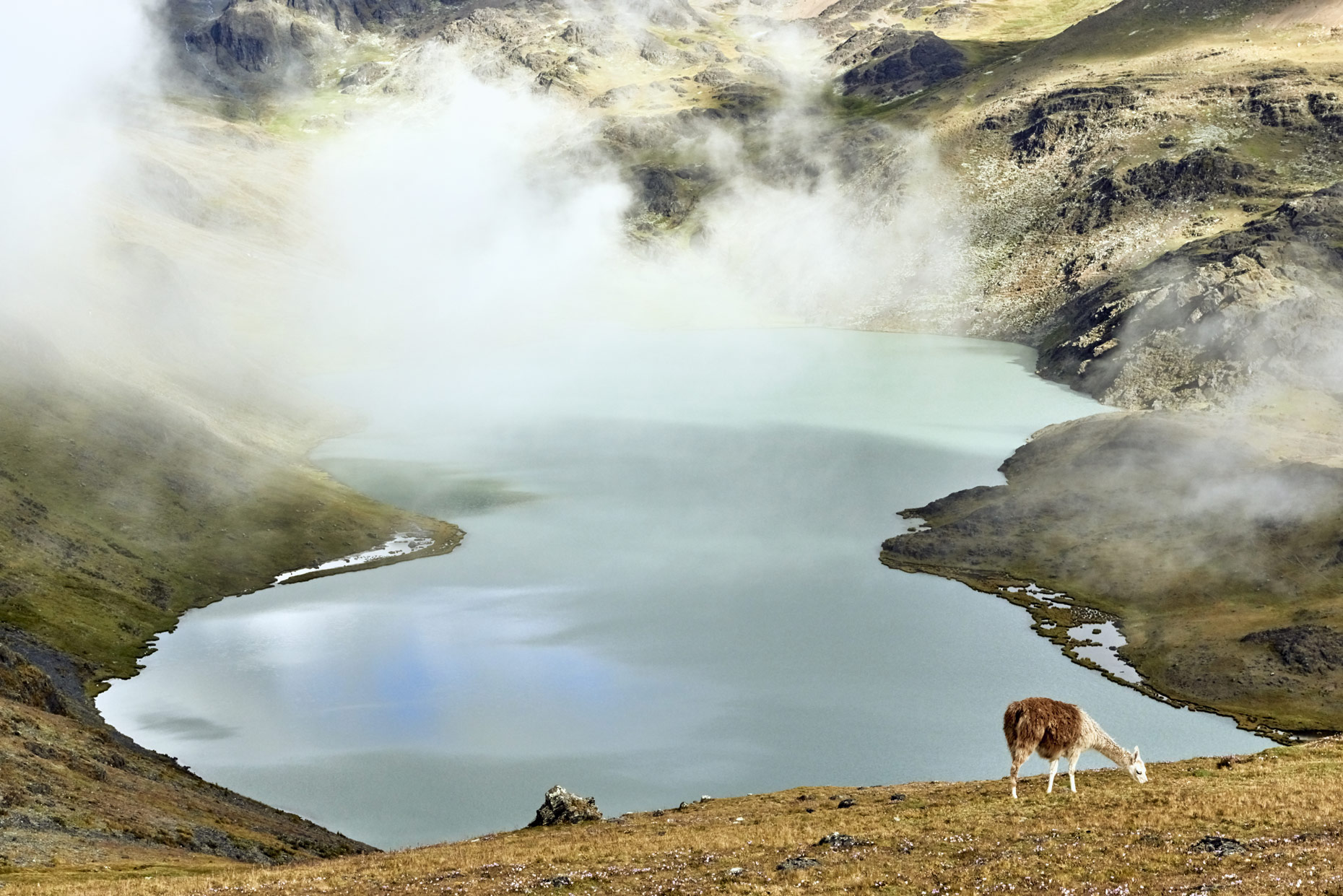 Beautiful-lake-view-in-Andean-mountains-with-Alpaca-grazing-nearby