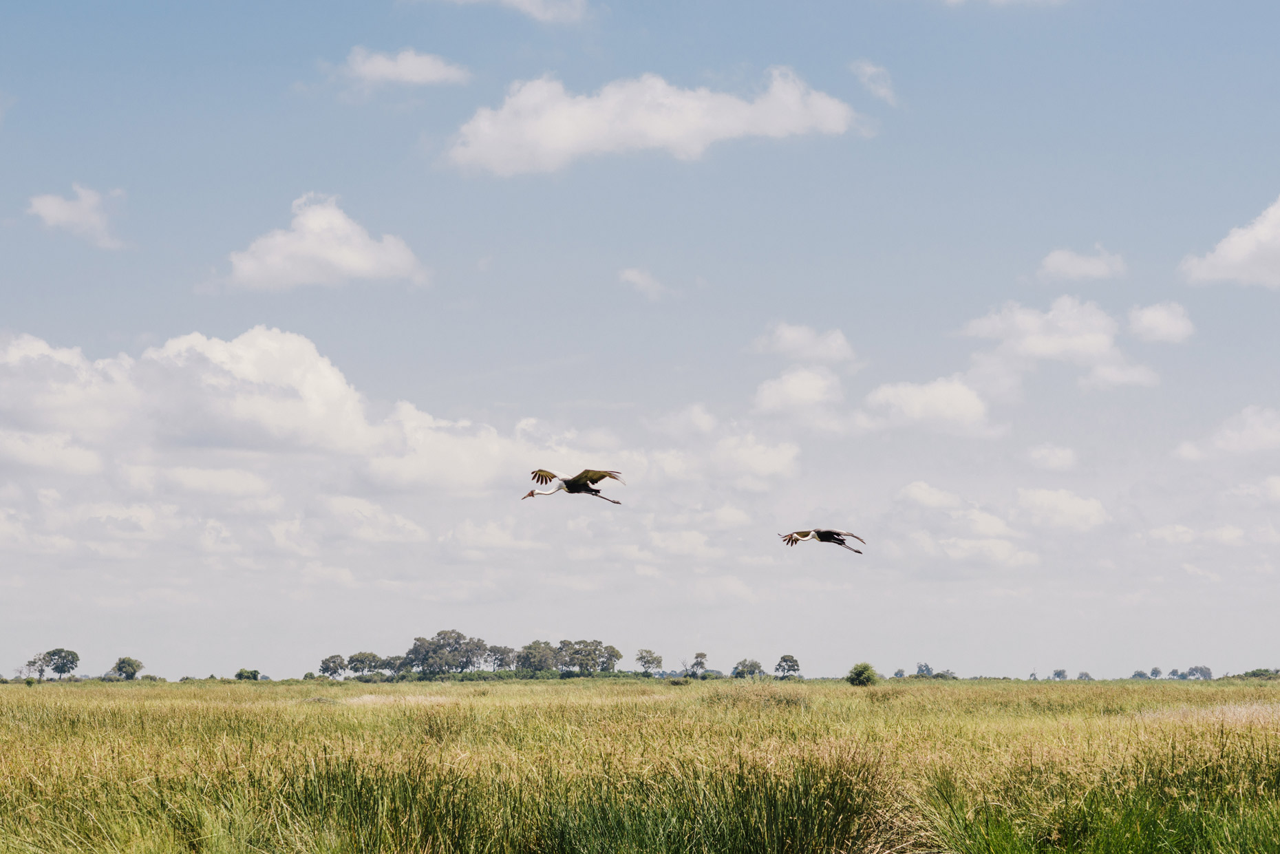 Birds-flying-below-cloudy-sky-on-safari