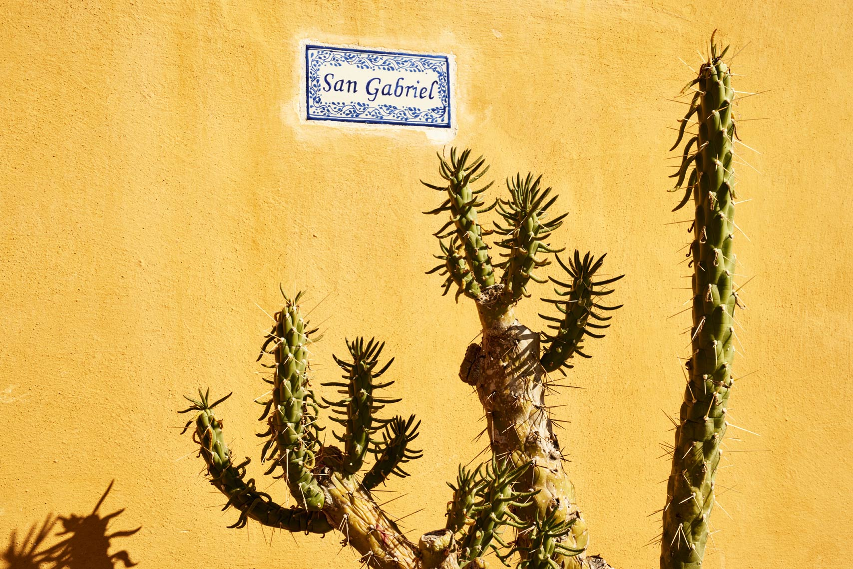Cactus-near-yellow-wall