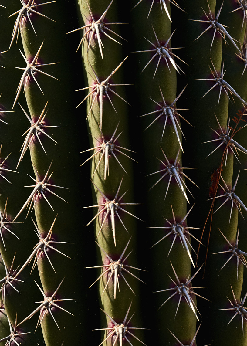 Close-up-of-cactus-spikes
