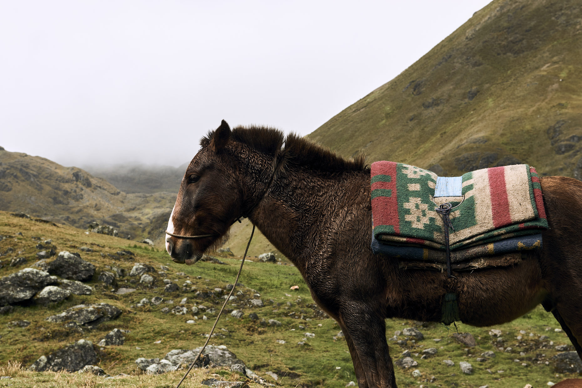 Horse-awaits-Andean-mountain-climb-in-the-Nation-of-Peru