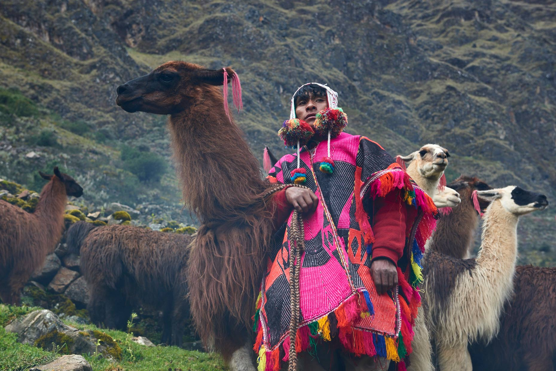 Peruvian-mountain-man-posing-with-his-Alpaca-herd