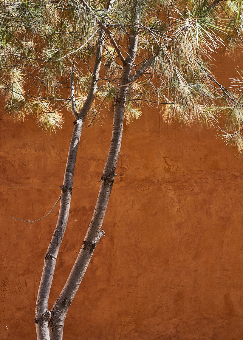 Thin-pine-tree-along-orange-plaster-wall