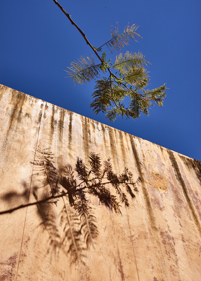 Tree-branch-and-shadow-on-orange-plaster-wall