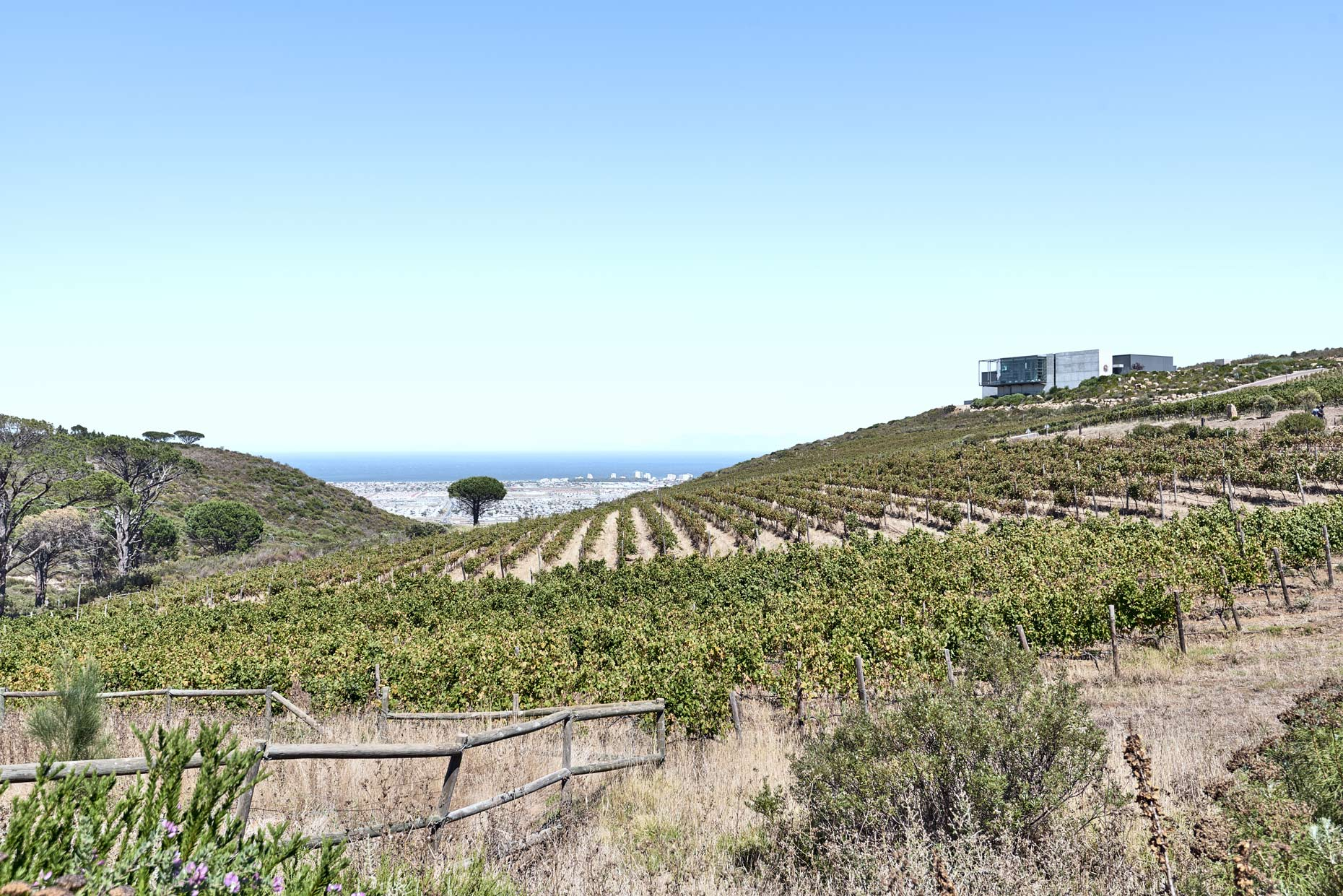Waterkloof-Winery-Ocean-View-from-Vineyard