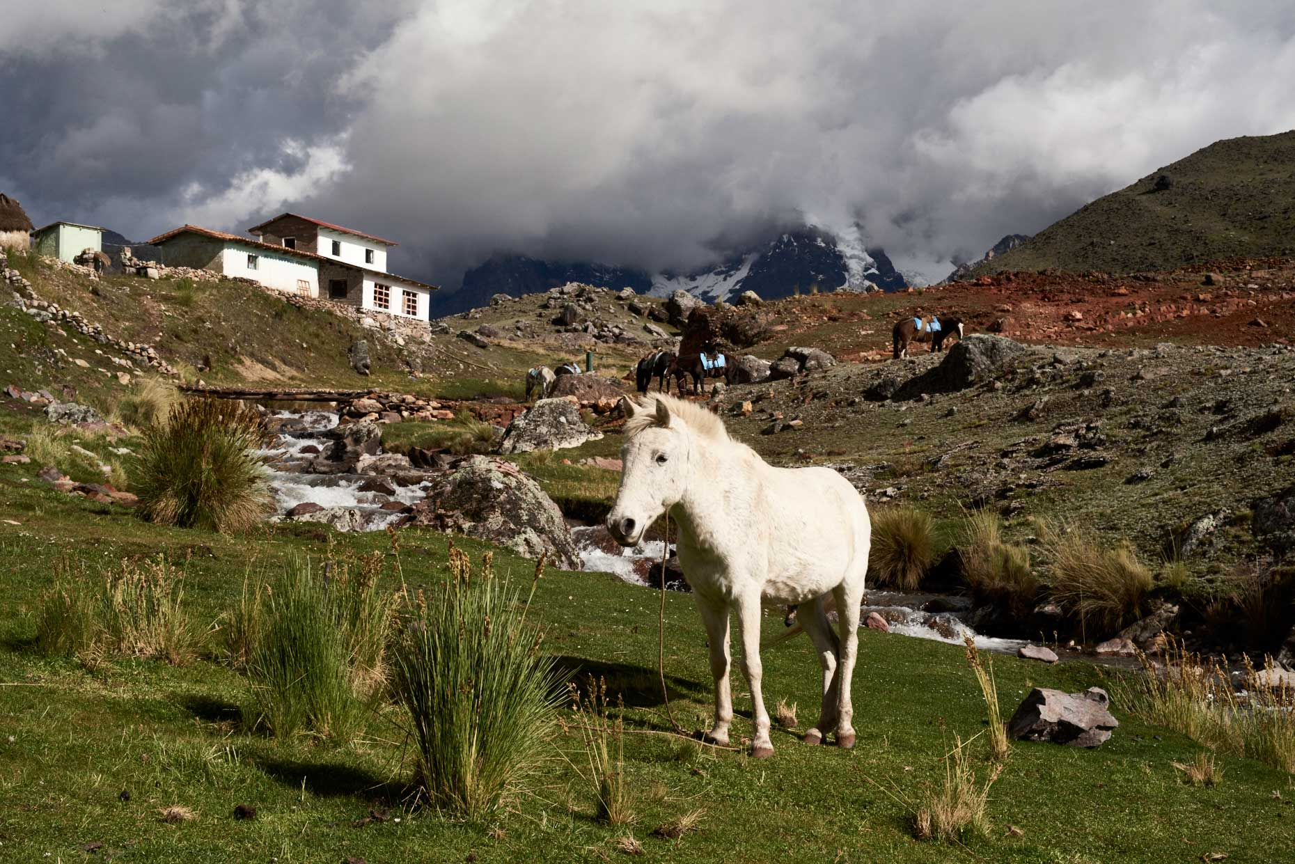 White-horse-with-snow-capped-mountain-in-background-of-Peru